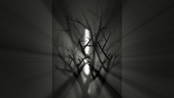 treelight-screen_05