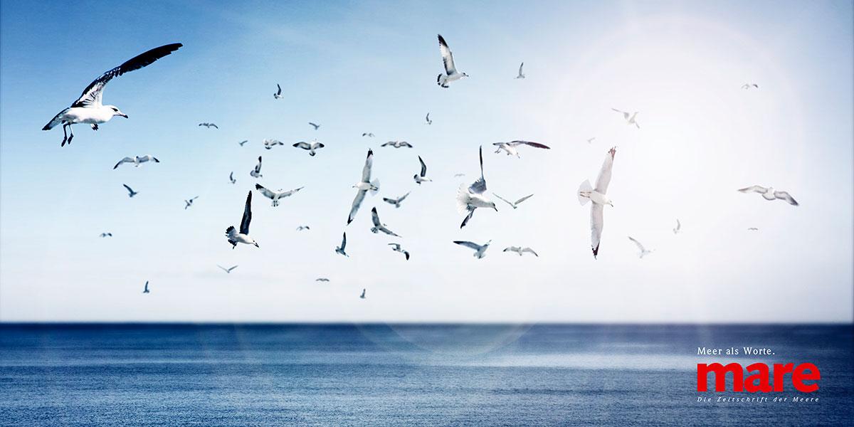 SSD_MARE-Anzeige_Freiheit